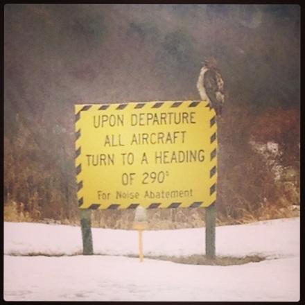 Airport Hawk